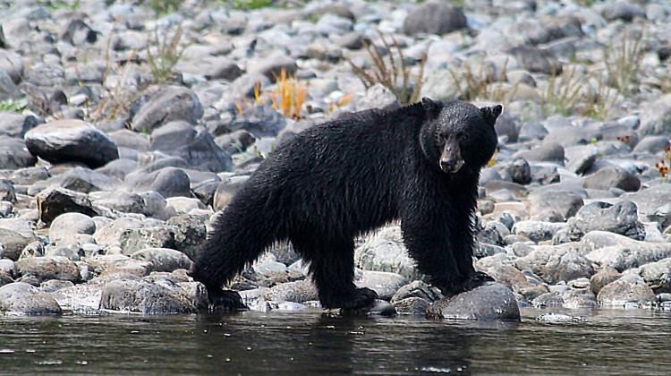 Rogue River Rafting - Oregon Rafting - Black Bear