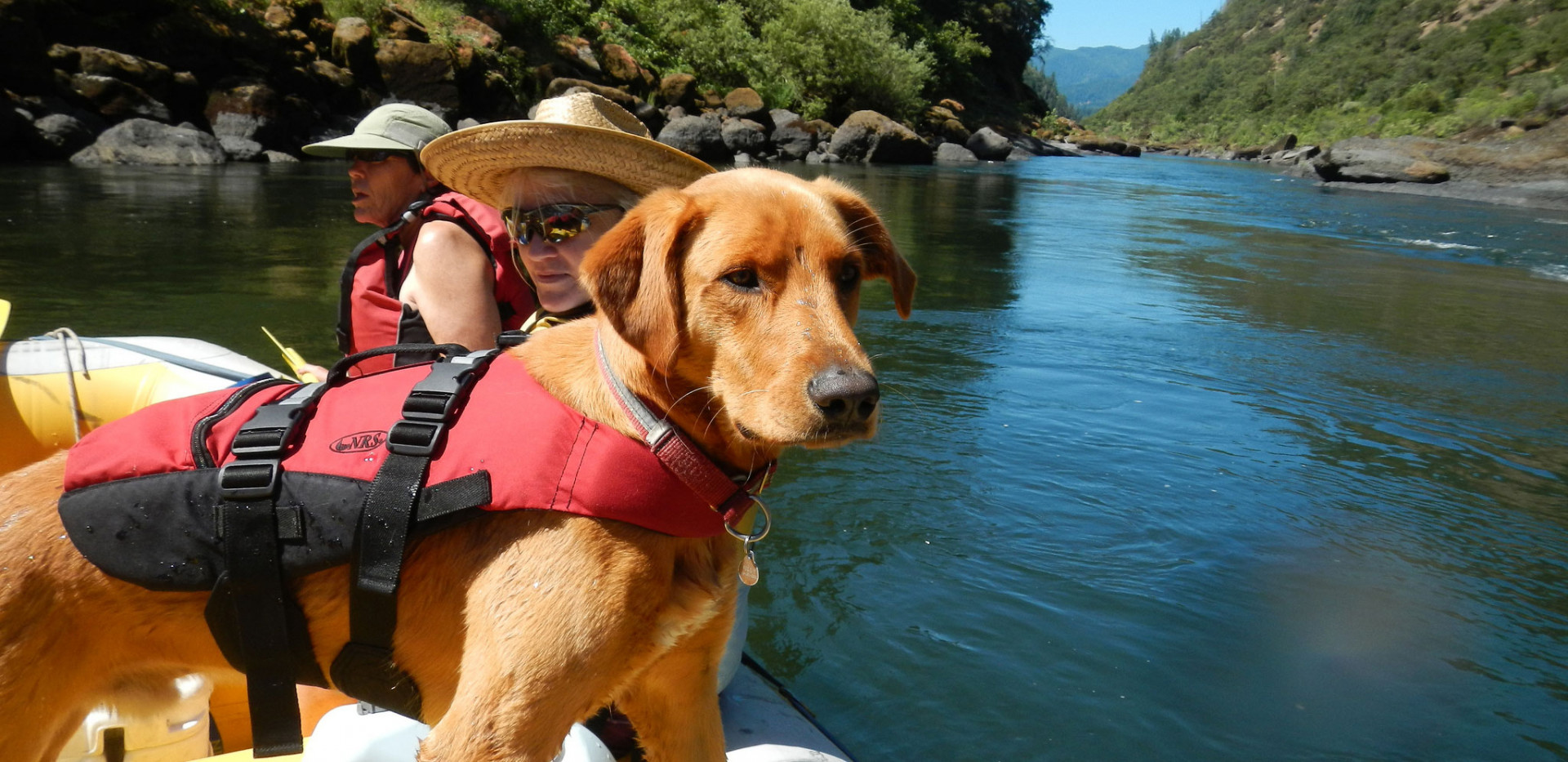 Family Charter Trips - Dogs - Rafting
